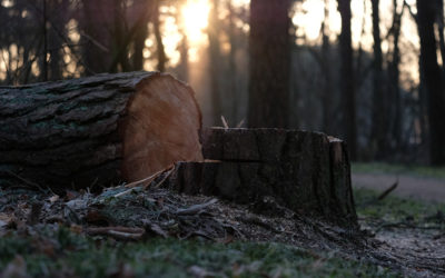 Legal options after a neighbor has cut down a tree on your property